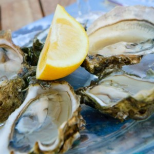 Oyster Half Shell